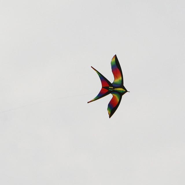 O envio gratuito de alta qualidade levando pólo Rainbow Color-changing pássaro Colorido tecido de nylon ripstop pipa andorinha voando juntos