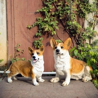 Mascot Garden Garden Decoration Resin Simulation Large Corgi Dog Sculpture Crafts Landscape Flooring