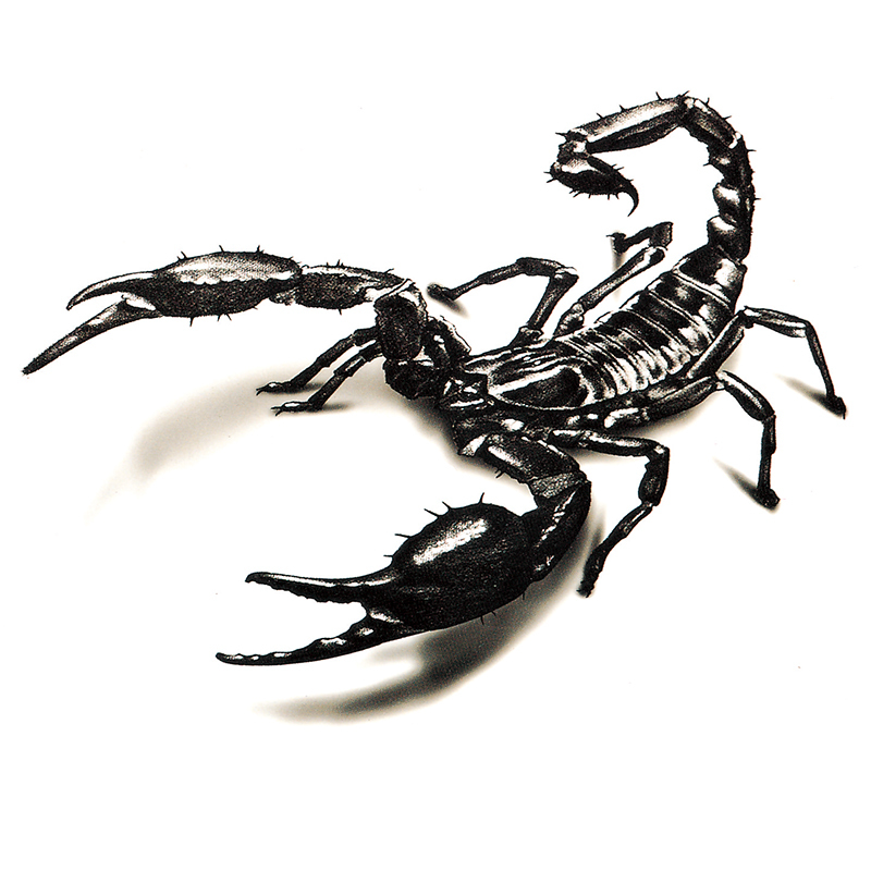 waterproof temporary tattoo stickers cute scary 3d scorpion animals design body art man woman make up tool in temporary tattoos from beauty health on