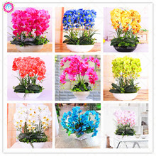 100pcs Mixed Phalaenopsis Seeds Beautiful Pink Bonsai Flower Seeds Ornamental Boat Orchid Plants Room Decoration Best packaging