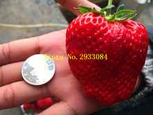 500pcs Germany super big strawberry seeds,fruit seeds, garden supplies,bonsai seeds gaint strawberry plant pot for home garden(China)