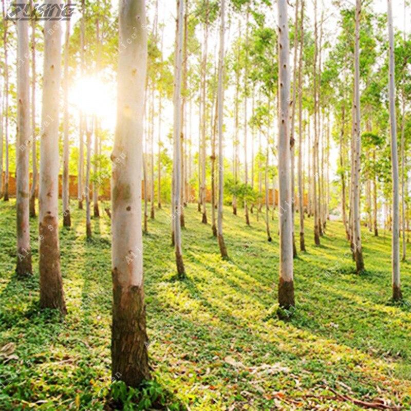 Zlking 100 шт. Австралии огромный эвкалипта семена высокий открытый растения тропического декоративное дерево семена обеспечивают Тенты для са... ...
