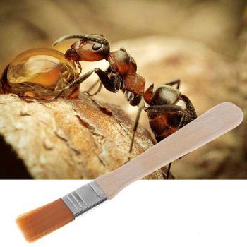 2019 farma mrówek do czyszczenia środek do usuwania kurzu zamiatarka Ant obszar owadów miska gniazdo czyste materiały tanie i dobre opinie CN (pochodzenie) Owady Drewna