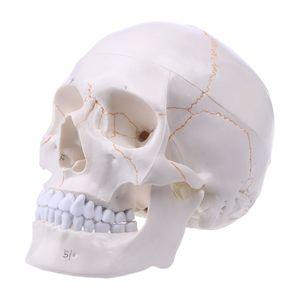 Image 5 - חיים גודל אדם גולגולת דגם האנטומיה אנטומיים רפואי הוראת שלד ראש לומד אספקת הוראה