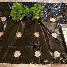 5 ~ 50 متر 5 ثقوب الأسود أغطية واقية بلاستيكية النباتات النباتية الزراعية تنمو فيلم الدفيئة الدفء مكافحة العشب مثقب بي فيلم