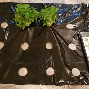 5 ~ 50m 5 otworów czarna plastikowa włóknina ogrodnicza rolnicze rośliny warzywne rosną Film szklarnia utrzymuj ciepło anty trawa perforowana folia pe tanie i dobre opinie Tewango 0 95meters Black Perforated Film Agricultural Cultivation Bulk and Folded In Bag
