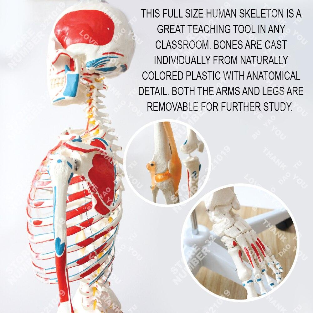 Ausgezeichnet Was Ist Eine Gemeinsame Anatomie Bilder - Anatomie ...