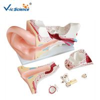 Advanced PVC Medical Anatomy Human Ear Model for Students Teaching