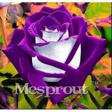 Срок! 100 Частиц большая Коллекция всех видов Редких Семян Розы Многолетние Цветы 14 сортов Роз МЕНЯ #007