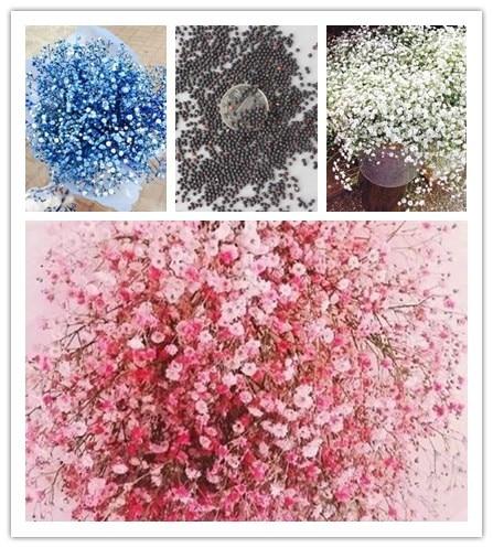 200 шт. многоцветный Гипсофила метельчатая цветок, многолетний сад цветок карликовые деревья декоративные цветы бонсай завод для наружного