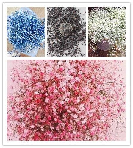 200 шт Многоцветный Гипсофила метельчатая цветок, многолетний Сад бонсай из цветов декоративные цветы бонсай завод для улицы