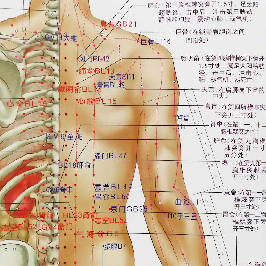Acupuncture Chinese Medicine Chart - Acupuncture ...