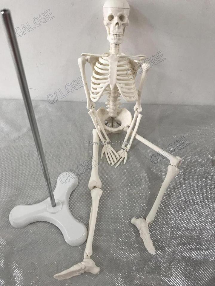 Free Shipping 45cm Small Bone Model Human Skeletal Model Skeleton Model Art Sketch Gift Doll Human Model Bone Model Human Modelskeleton Model Aliexpress