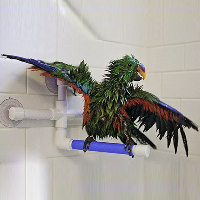 High Quality Parrot Bath Shower Standing Platform Rack Parrot Climbing and Biting Shower Perch Parakeet Bird Toy Random Color 1
