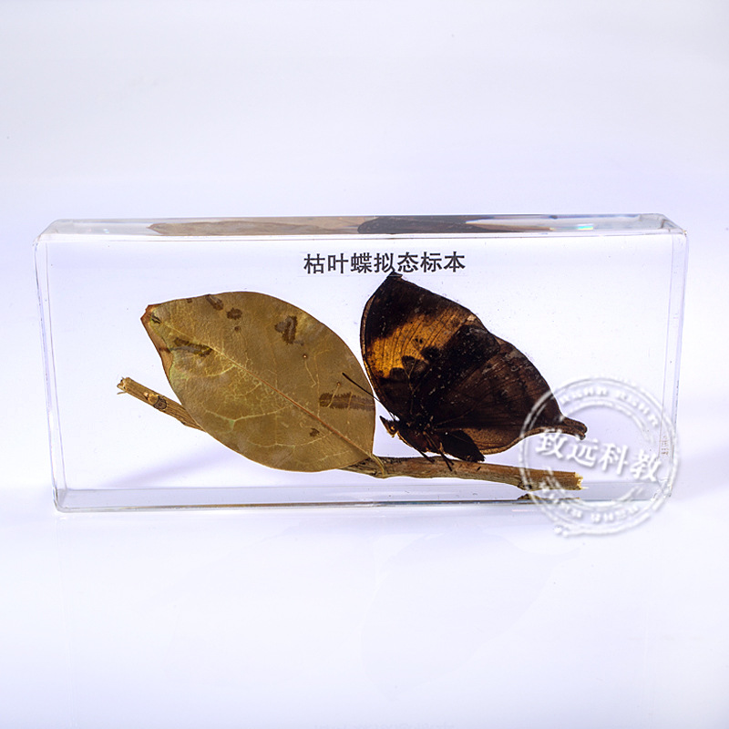 Withered leafbutterfly Specimens In Clear Lucite Block Educational Instrument Middle school biology School teaching aids fishbone fispecimens in clear lucite block educational instrument middle school biology school teaching aids