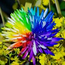 200 PCS/BAG Chrysanthemum garden Aster Flower Bonsai plant Rainbow flor Perennial flowers