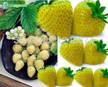 Marvelous Compare Prices On Alpine Garden Online Shoppingbuy Low Price  With Likable Yellow Wonder Alpine Strawberry  Seeds High Germination Pot Fruit Bonsai  Garden Plant Free Shipping With Enchanting What To See In Covent Garden Also Chelsea Garden Furniture In Addition Houston Garden Center Phone Number And Academy Gardens As Well As Tv Gardeners Additionally Covet Garden From Aliexpresscom With   Likable Compare Prices On Alpine Garden Online Shoppingbuy Low Price  With Enchanting Yellow Wonder Alpine Strawberry  Seeds High Germination Pot Fruit Bonsai  Garden Plant Free Shipping And Marvelous What To See In Covent Garden Also Chelsea Garden Furniture In Addition Houston Garden Center Phone Number From Aliexpresscom