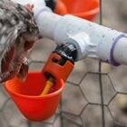 4 Pieces Poultry Hen...