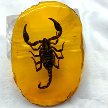 Yellow Amber Fossil With Insects Scorpion Cicada Samples Stones Crystal Specimens Imitations Healing Home Decorations Collection