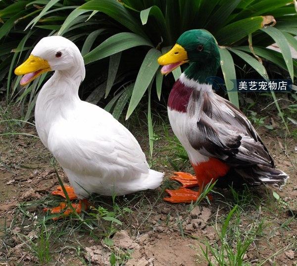 simulation duck model,polyethylene&fur large 18x14x30cm handicraft toy home decoration Xmas gift b3838 new big simulation wings pigeons toy polyethylene