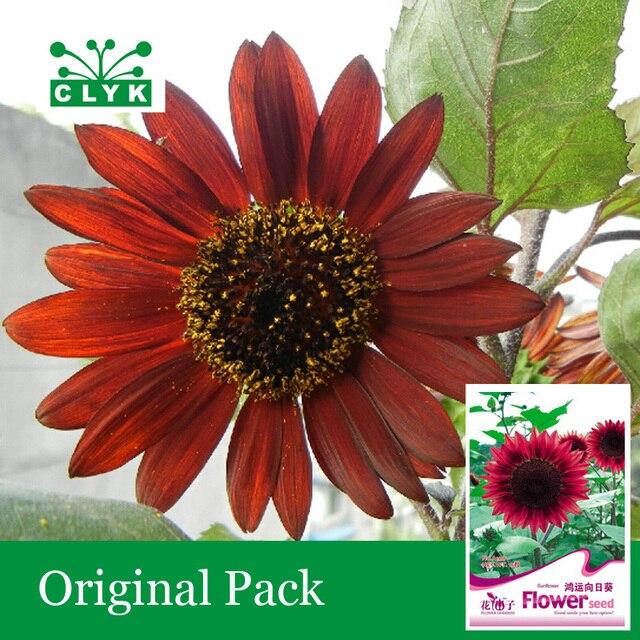 Comprar 15 unids bolsa girasol rojo - Semillas de frutas y verduras ...