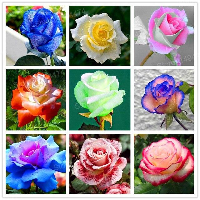 Couleur Rose Fleur Bouquet Fleur Mariage Gite Pompadour Lubersac