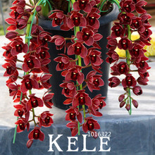 New Arrival!100 Seed/Bag Dark Red Chinese Cymbidium Orchid Flower Seeds Indoor Potted Flowers Cicada Orchid Seeds,#OPKE3U(China)