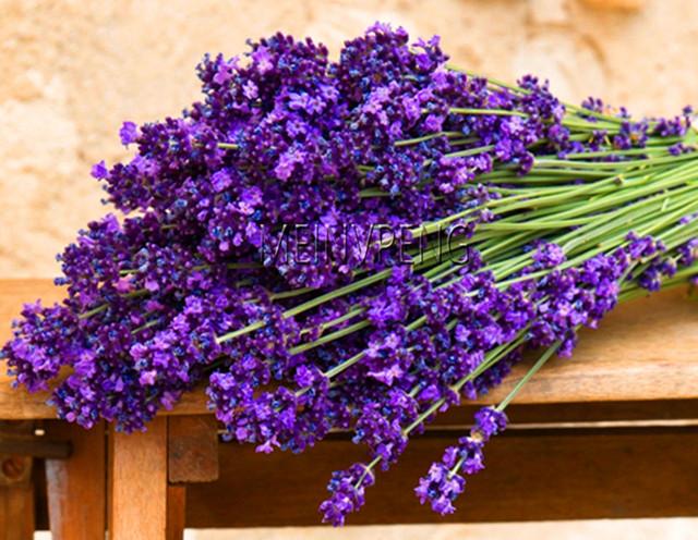 New Arrival!200pcs / bag french provence lavender bonsai very fragrant organic lavender plant flower Flower plant Home Garden