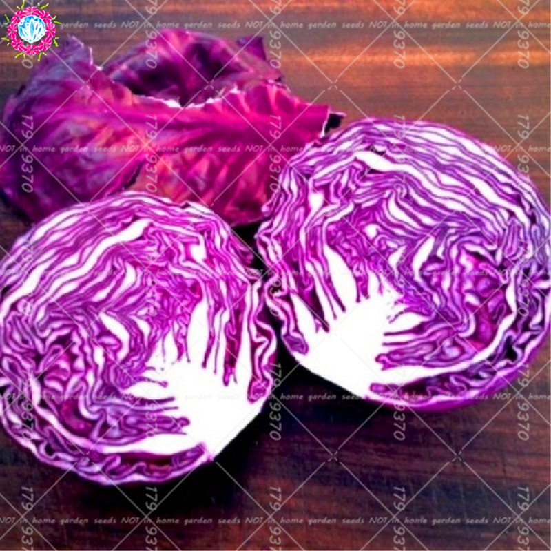100Pcs Purple Cabbage Organic Half cold bonsai cabbage vegetables  Nutritious for health For Home Garden Plants Salad food