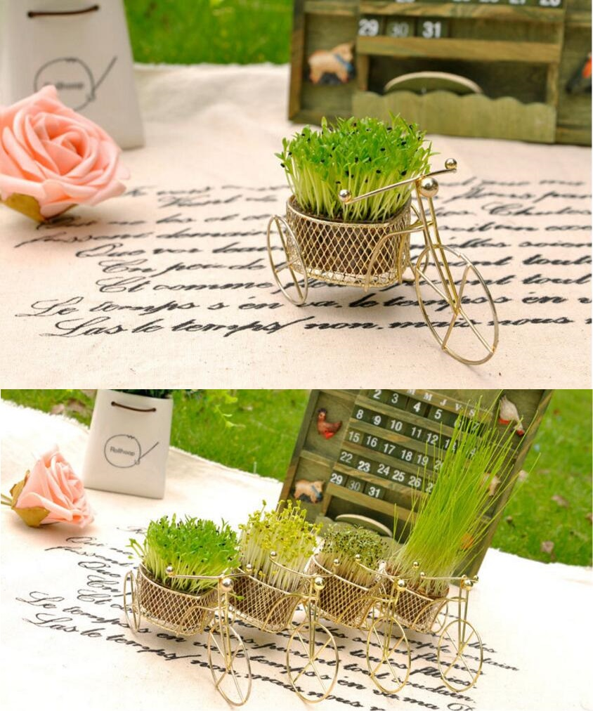 1pc Hot Sale Home Decoration Mini Bicycle Flower Pots Green Seeds