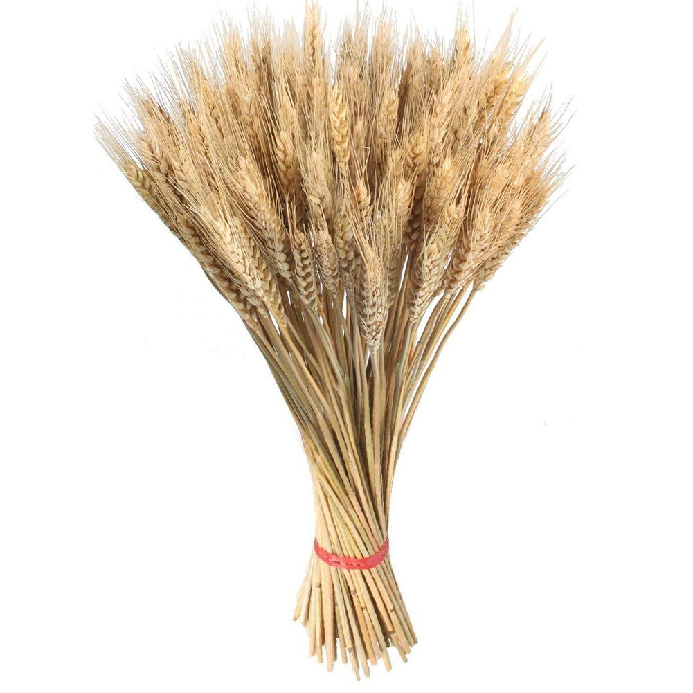 100 Pcs Large Wheat Dried Flowers Garden Plants Natural For Wedding Decorations