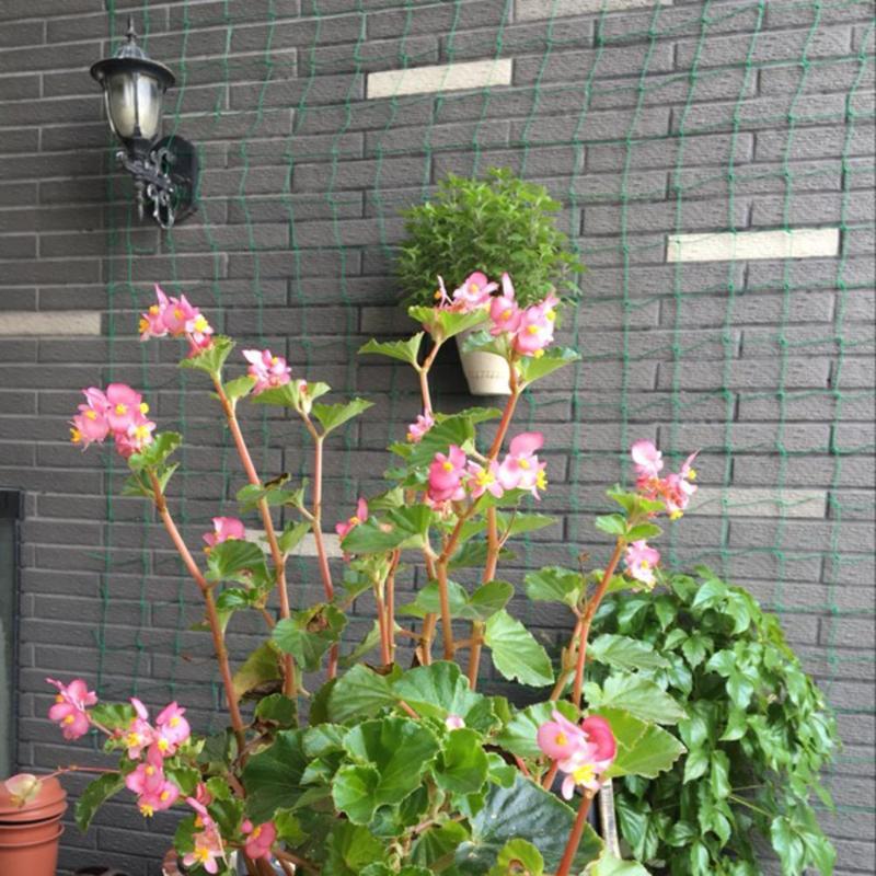 1.8*1.8m Millipore Nylon Net Climbing Frame Gardening Net Plant Fence Bird-Preventing Anti-Bird Devices Anti-Bird Mesh