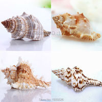 Natural Big Conch 5-10cm*Free Gift 60 pcs Small White Conch Fish Aquarium Decoration Mediterranean Beach Concha Sea Shell Craft