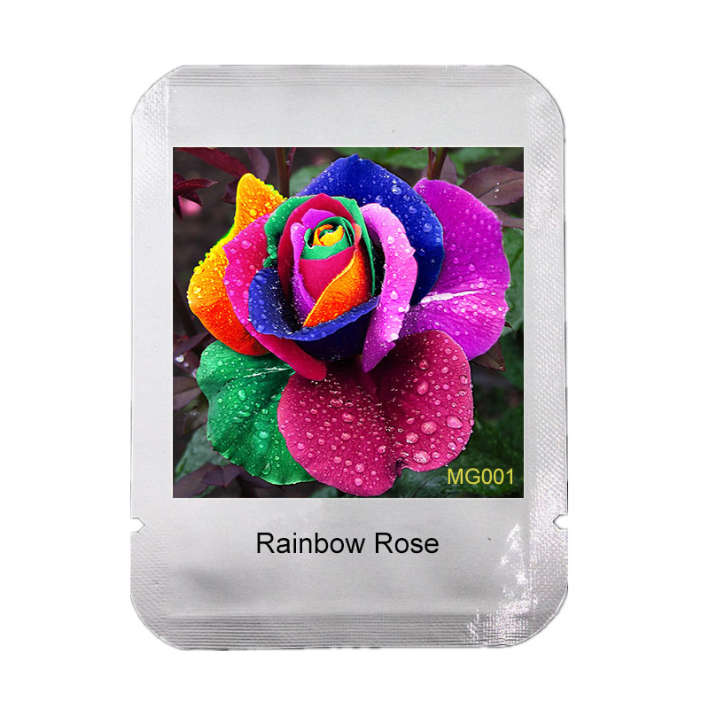100 pcs Seeds Rare Holland Rainbow Rose Flower Home Garden Rare Flower Seeds Colorful Rose Seeds * Professional Packaging,#MG001