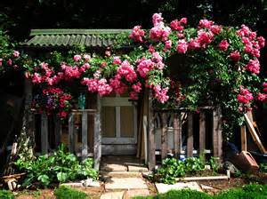 Creepers Flowers Seed Rosa,Polyantha Rose, Chinese Flower Seeds ,Climbing  Roses Seeds