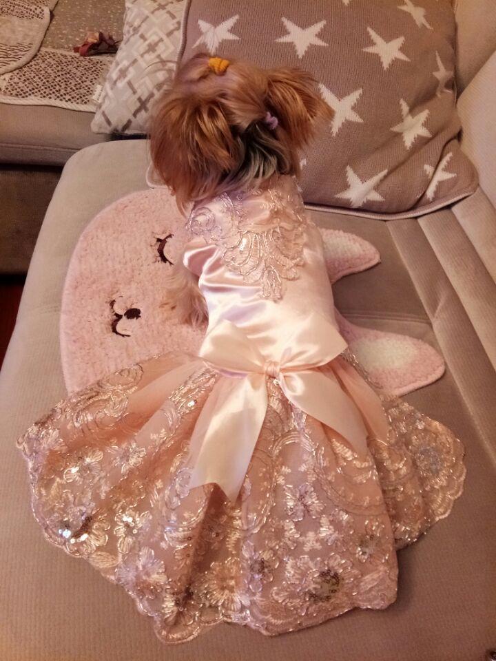 Prabangus princesė šunų vestuvių suknelė nėrinių naminių - Naminių gyvūnėlių produktai - Nuotrauka 4