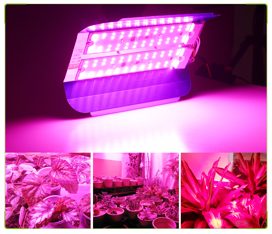 RAYWAY LED Plant Grow Light Full Spectrum Waterproof 50W 100W LED Growing Lamp Phyto For Vegetables