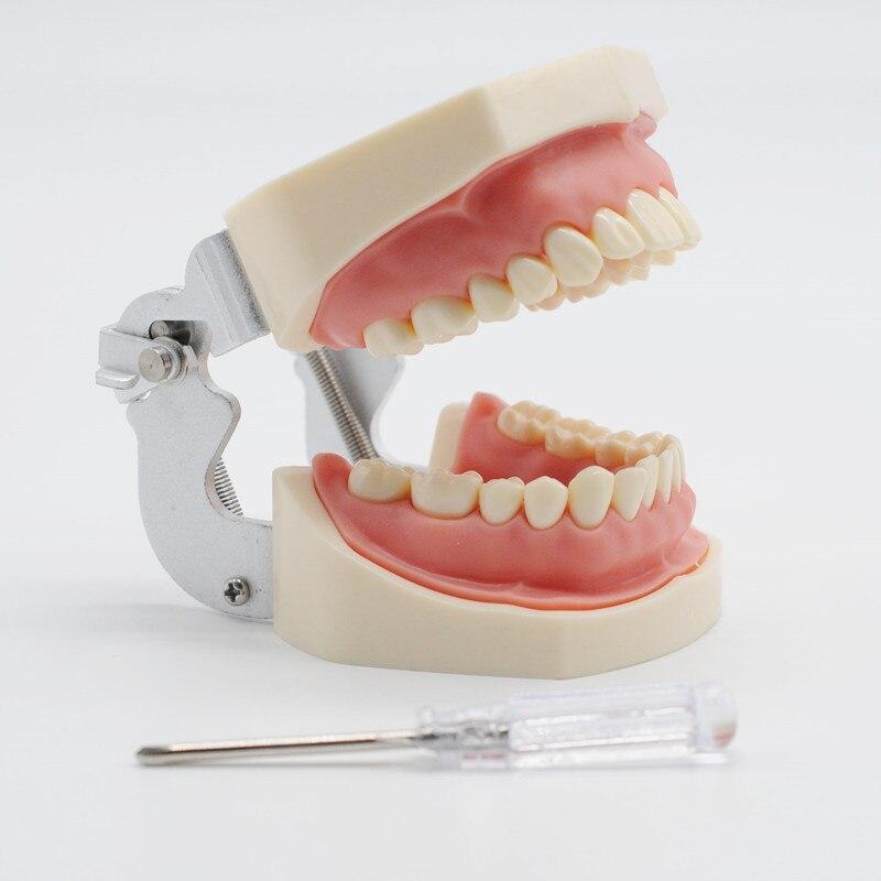 Remplacement des dents de modèle de dents de gomme molle pour la pratique d'étudiant d'étude dentaire
