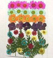 Các loại Khô Ép Hoa + Leaf Lá Cây Herbarium Đối Với Trang Sức Khung Ảnh Trường Hợp Điện Thoại Craft Làm DIY-DH014