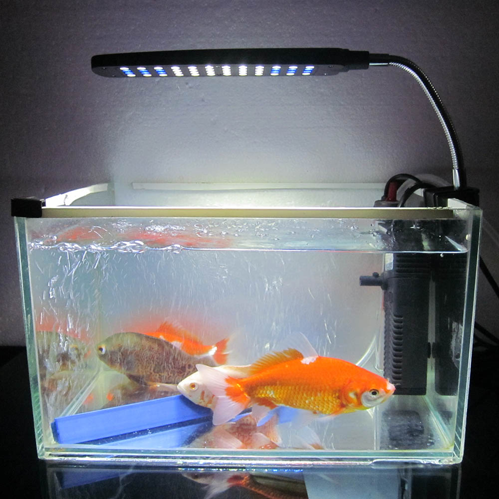 Fish in new aquarium - New Flexible 3 Modes White And Blue Aquarium Accessories Fish Tank Water Plant 48 Leds 3w