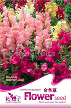 (Mix minimum order $5)1 original pack 100 pcs Common snapdragon Flower Seeds free shipping