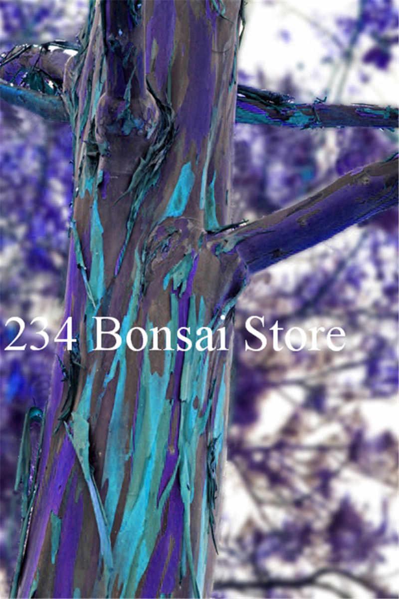 بيع! 50 قطع قوس قزح الكافور شجرة بونساي ، 100% حقيقية جميلة الزينة شجرة ، الخضرة الشجيرات بونساي شجرة ، سهلة تنمو