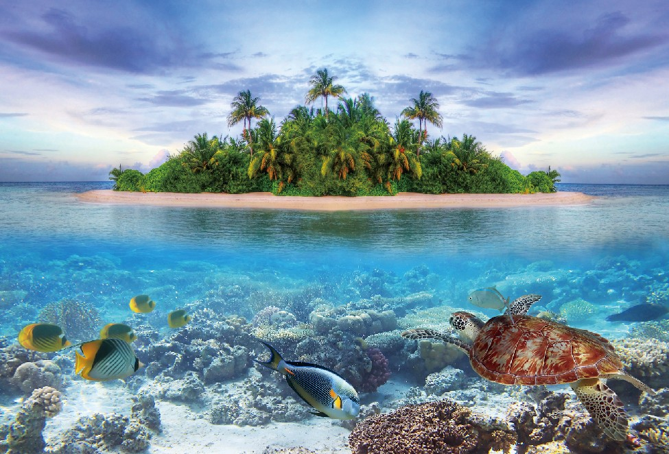 Laeacco Tropical Underwater Fish Tortoise Coral Island Tree Photo Backgrounds Customized Photography Backdrops For Photo Studio