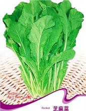 Rocket Salad Seeds Arugula Vegetable Plant D021