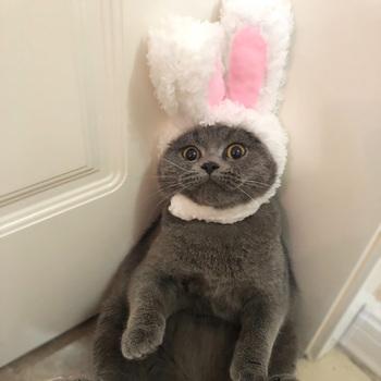 Śmieszne słodkie kostium dla zwierząt Cosplay kapelusz królik czapka dla kota Halloween boże narodzenie noworoczne ubrania przebranie małe akcesoria dla psów tanie i dobre opinie NoEnName_Null Polar Stałe Pink White Cats Puppy Small dogs