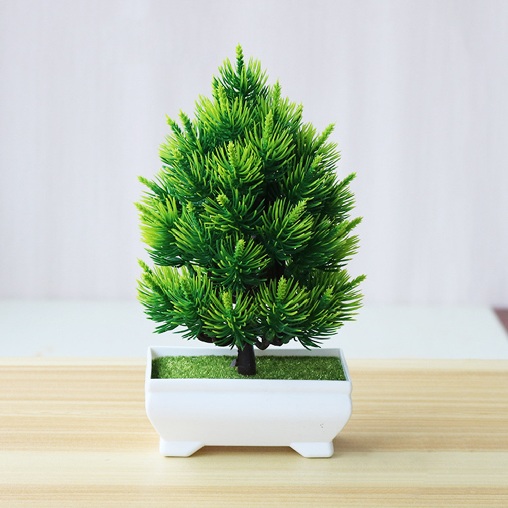 Pine Tree Bonsai Small Pot Plants