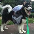 Pet Аксессуары Для Собак Мешок Седло Рюкзак Средних И Крупных Большой Пакет Собака Рюкзак Для Наружного Походы Кемпинг Обучение Pet Carrier