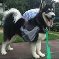Pet Accessory Dog Bag Saddle Backpack Medium And Large Big Dog Pack Backpack For Outdoor Hiking Camping Training Pet Carrier