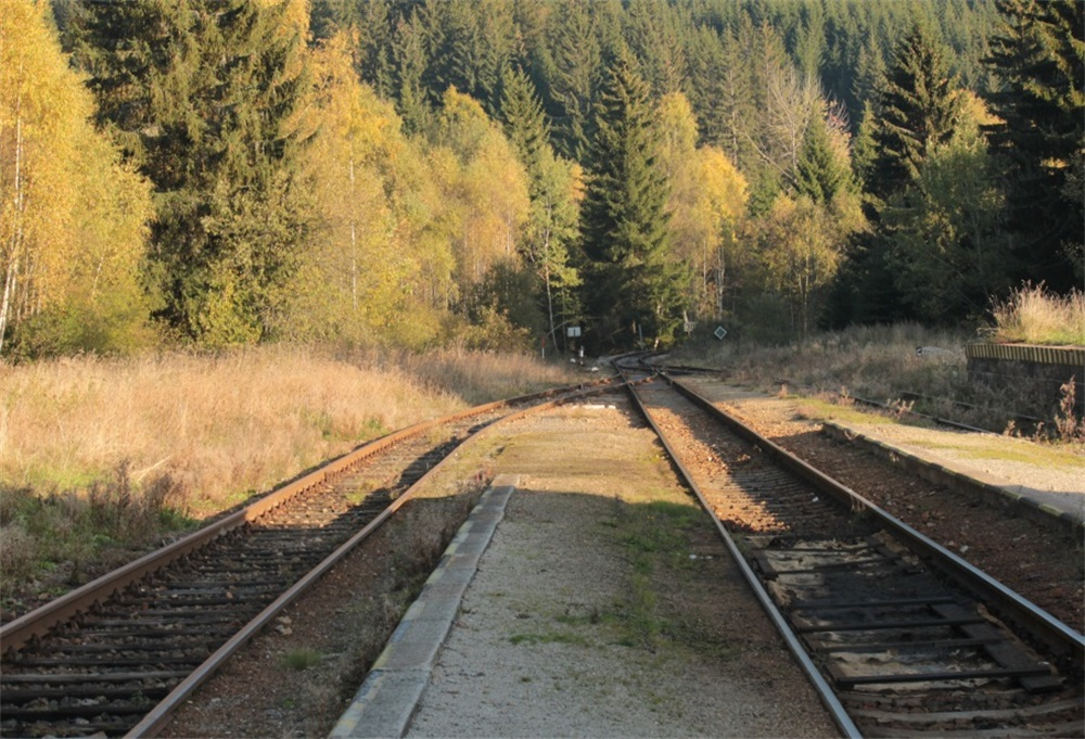 Laeacco Wild Trees Railway Scenic Photography Backgrounds Customized Photographic Backdrops For Photo Studio