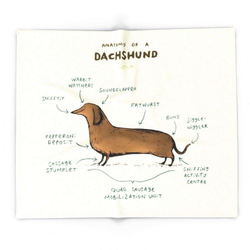 Anatomy Of A Dachshund 51\
